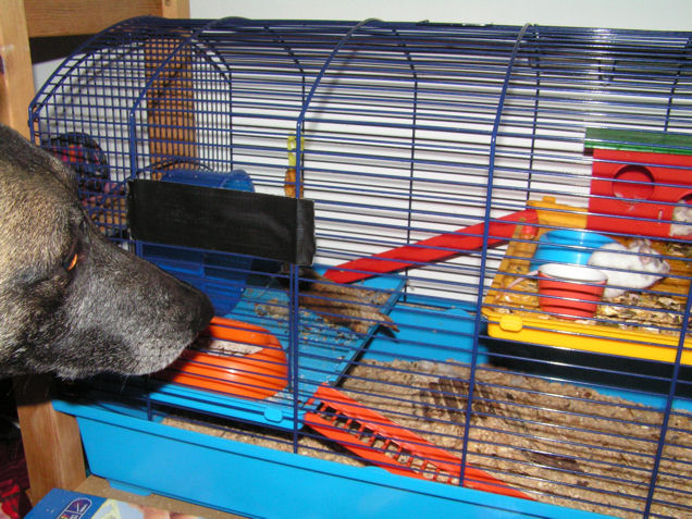 suche dringend einen m use hamsterk fig. Black Bedroom Furniture Sets. Home Design Ideas